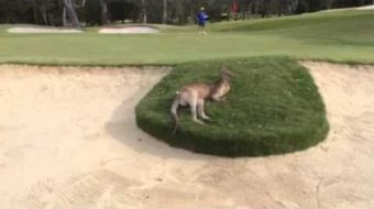 "Australian Golfers Hit Into a Different Kind of ""Gallery"""